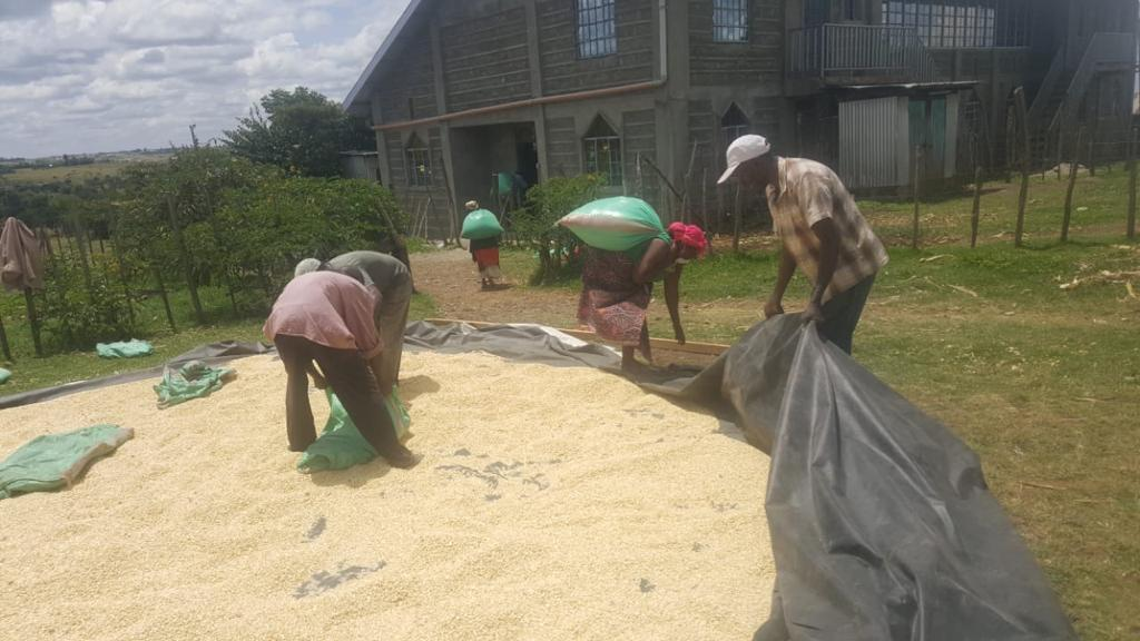 To cut costs, these locals from Kenya bought grain straight from farmers and wholesalers and processed the grain themselves before packing them into bags of 90kg for storage.